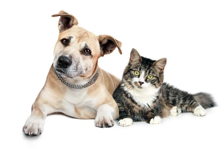 Gyvūnėlių priežiūros interneto svetainės kūrimas