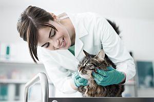 Gyvūnų Interneto svetainės kūrimas 3