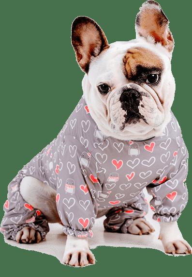 Kuriame internetines parduotuves naminių gyvūnėlių tema