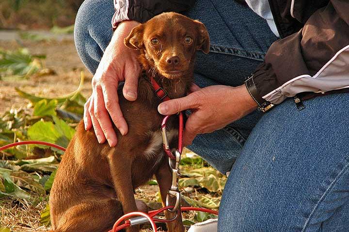 Kuriame interneto svetaines naminiu gyvūnų milėtojams