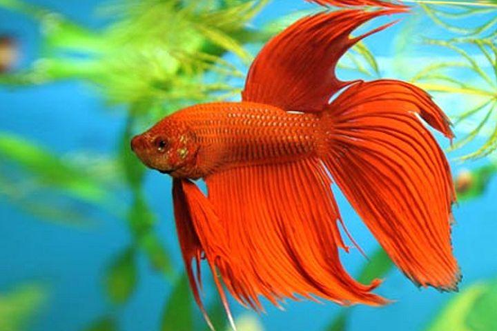 Kuriame interneto svetaines žuvyčių milėtojams
