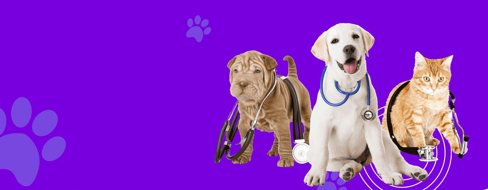 Naminių gyvūnėlių internetinių parduotuvių kūrimas Slider-1