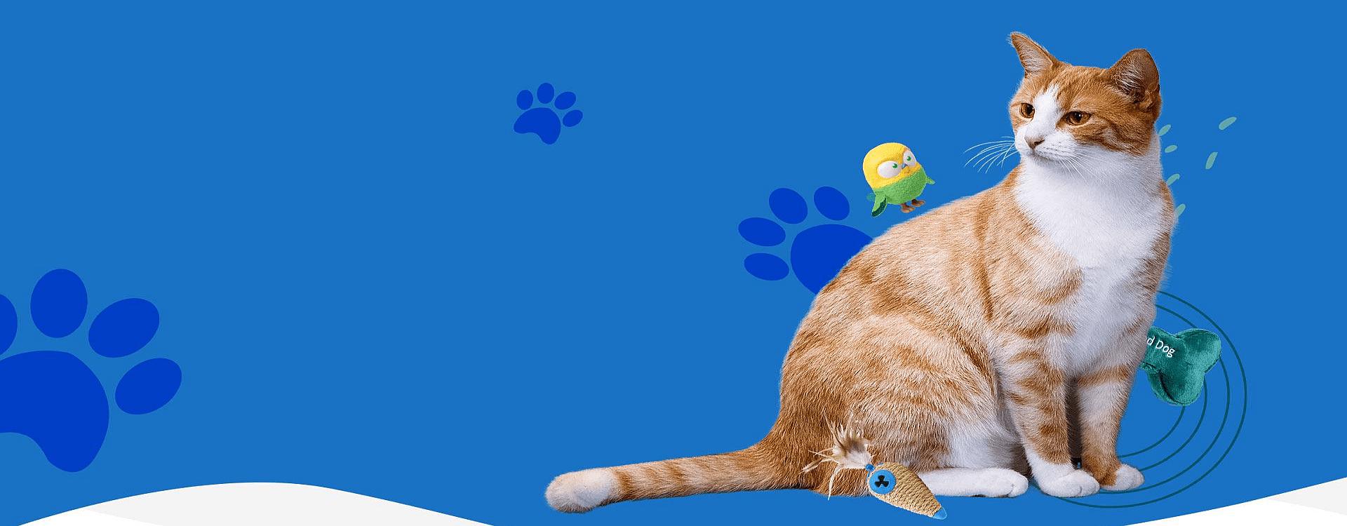 Naminių gyvūnėlių internetinių parduotuvių kūrimas Slider-3