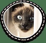 Naminių gyvunėlių svetainė -6